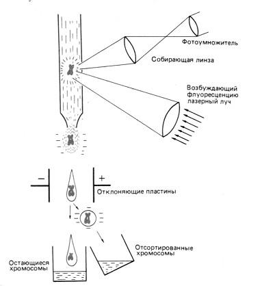 Генная инженерия и биотехнологии